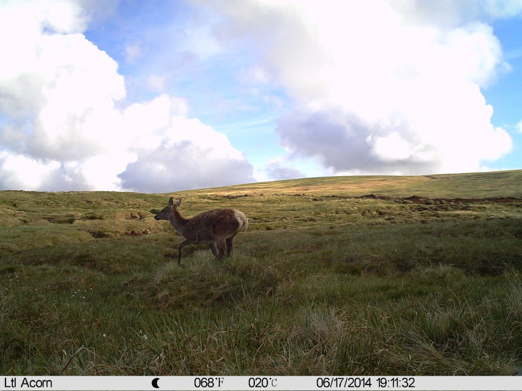 An example picture from the animal camera